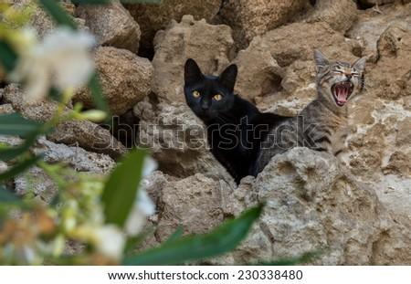 Stray cats family - stock photo