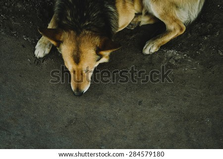 stray dog, a sheepdog, a top view, focus on gravel - stock photo