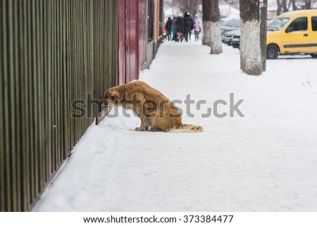 Stray dog begging food at house residents