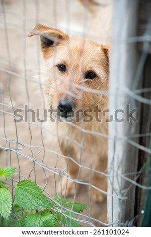Stray dog behind the corral of a dog refuge