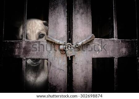 stray dog Black and White - stock photo