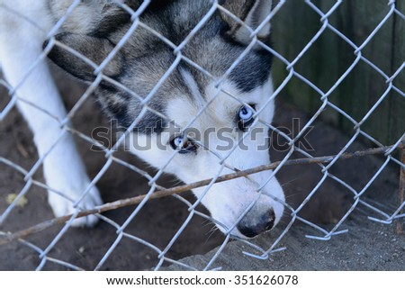 stray dog in shelter locked behind mesh - stock photo