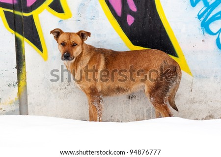 Stray dog in the cold snow against the graffiti wall