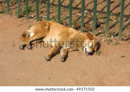 Stray dog is sleeping in the street - stock photo