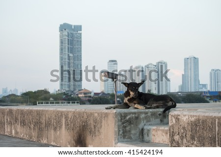 Stray dog living in a big city without care. - stock photo