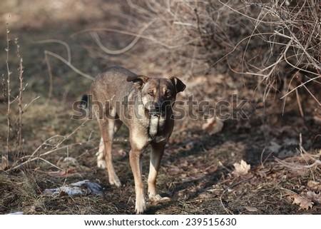 stray dog looks smart and very sad look - stock photo
