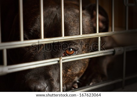 Stray dog looks through the bars of his cage at the animal rescue shelter - stock photo