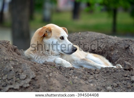 Stray dog lying on a pile of soil in the park - stock photo