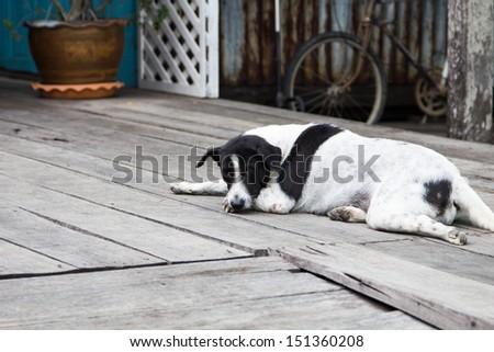 stray dog lying on the sidewalk - stock photo