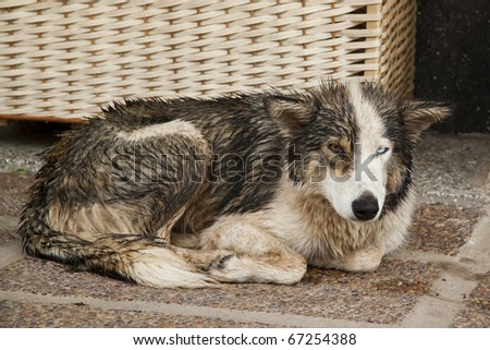stray dog lying on the sidewalk - stock photo