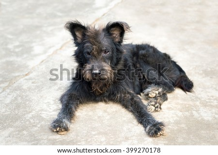 stray dog or homeless dog abandoned on the streets - stock photo