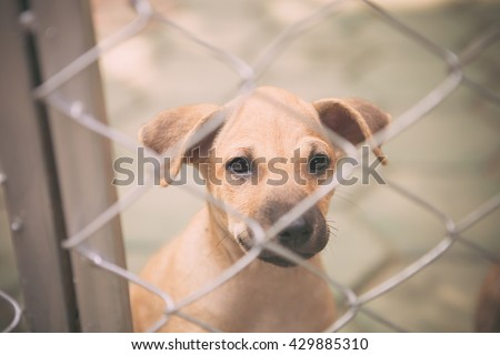 stray dog pitiable Behind cage. vintage tone effect - stock photo