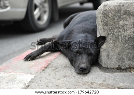 Stray Dog Resting on a Roadside in Bangkok - stock photo