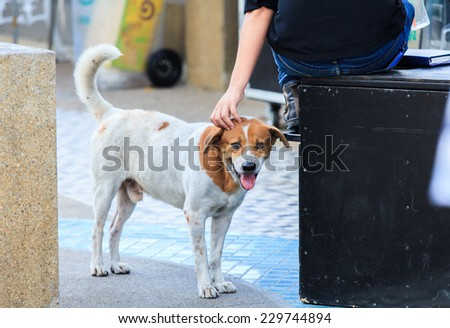 Stray dog was patting by a woman.