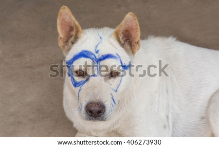 stray dog with drawing glasses - stock photo
