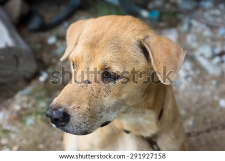 Stray dogs are captured - stock photo