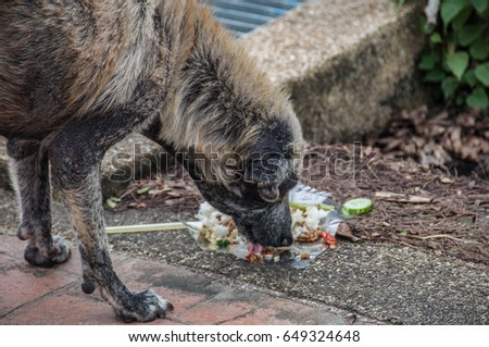 Stray dogs eat food on the street.