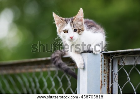 stray kitten sitting on a fence