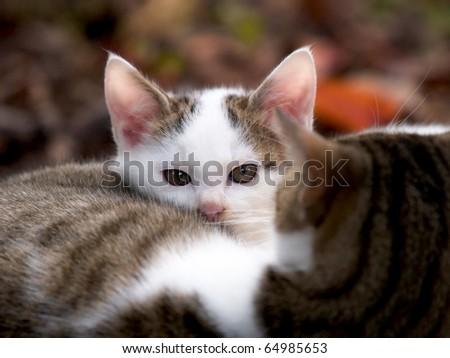 Stray kittens - stock photo