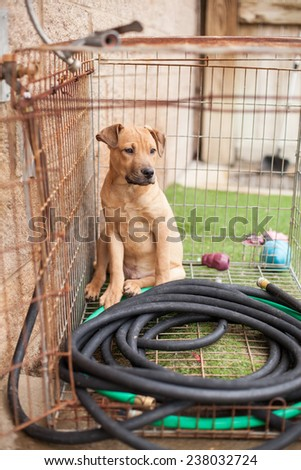Stray puppy waits for rescue in cage at animal shelter - stock photo