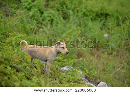 Strayed puppy - stock photo
