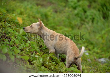 Strayed puppy exploring his world. - stock photo
