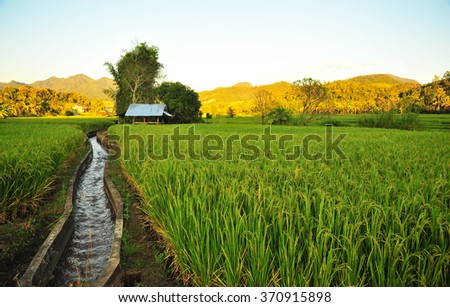 Stream and Little House in the Rice Field - stock photo