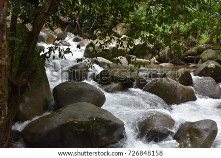 stream and stone in forest