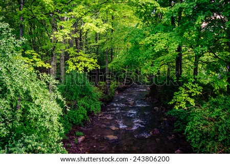 Stream at Millbrook Village, at Delaware Water Gap National Recreational Area, New Jersey. - stock photo