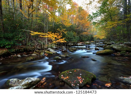 Stream in fall colors, the great smokey mountains national park.