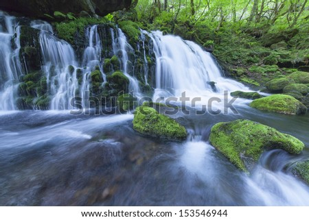 Stream in green forest