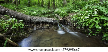 stream in green forest,clean water and spring green forest,nature background