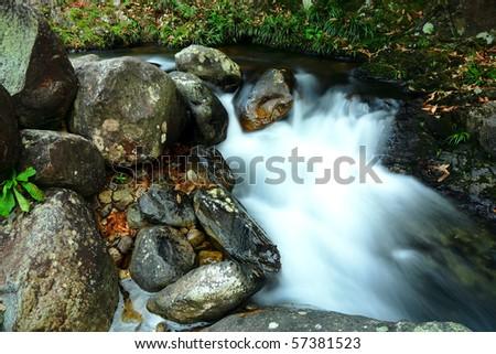 stream in jungle - stock photo