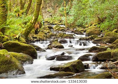 Stream in Killarney National Park - Ireland - stock photo