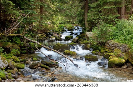 Stream in old woodland, Tatry, Poland