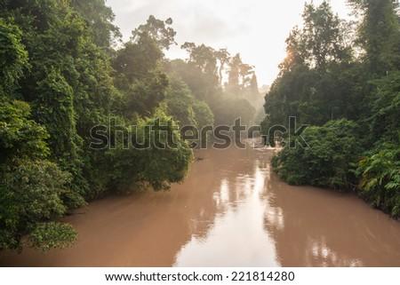 Stream in rainforest - stock photo