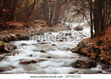 Stream in the autumn forest - stock photo