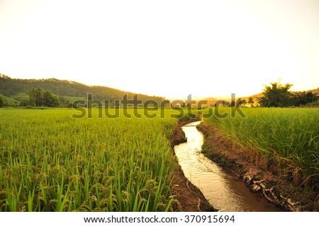 Stream in the Rice Field - stock photo