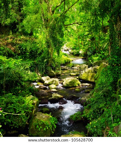 Stream in the tropical forest. - stock photo