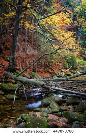 Stream with fallen tree in autumn forest mountain wilderness, leaves on steep slope, natural environment of the mountains - stock photo