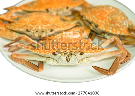Streamed crab isolated on white background - stock photo