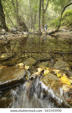 streaming water between rocks with autumn leaves, river flow with long exposure giving smooth water surface, Andarax River in Almeria, Spain - stock photo