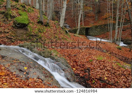 Streams in a wood covered with golden leaves - stock photo