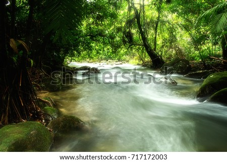 Streams, waterfalls in the forest