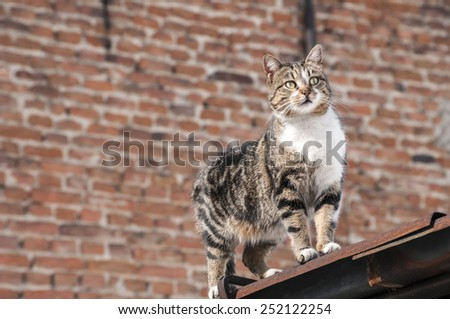 Street cat on roof on brick wall background