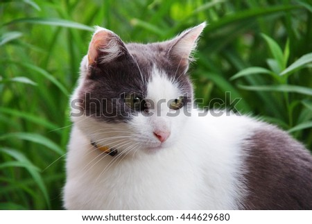 Street cat sitting in the grass