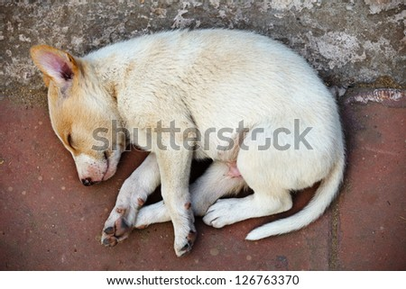Street homeless mongrel puppy sleeping on the sidewalk - stock photo