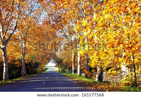 Street of autumnal scene in the forest