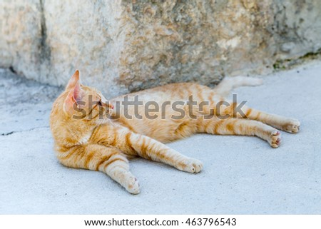 street red cat rests