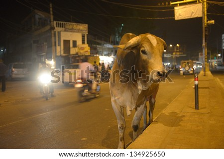 Street traffic in Agra. Cow walking in the middle of the street. Group of men walking behind. Old buildings and cars in background. Night time